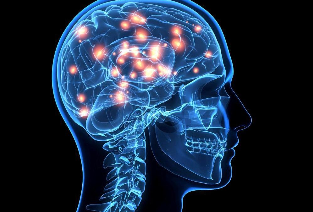 17E – Neuropsicología y vulnerabilidad social: Cerebros en crecimiento