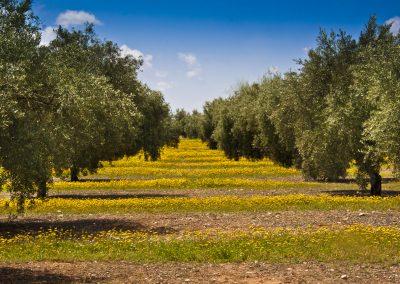 12K – Eliminación de contaminantes presentes en aguas residuales mediante bioadsorción en residuos del olivar