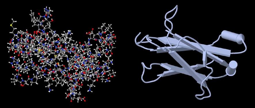 33A – Identificando las proteínas de las células